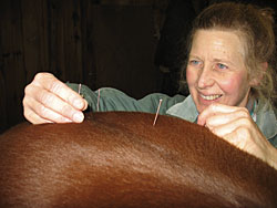 Dr. Hoyns's acupuncture patients include horses, dogs, and cats.