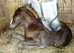 foal-2