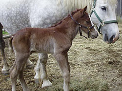 foal-4